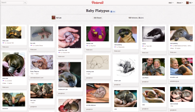 Ed Lee Pinterest Baby Platypus
